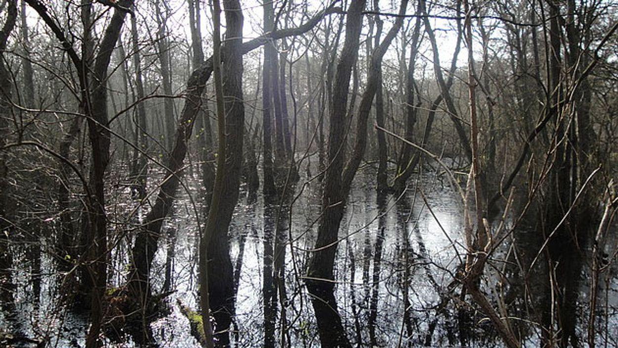 Afbeelding van Rode Lijst voor landschappen