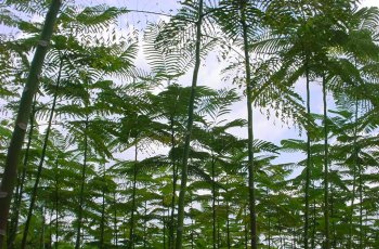 Afbeelding van Brazilië geeft deel Amazone aan boeren