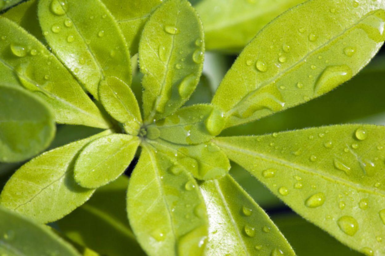 Afbeelding van Tuinreservaten: op zoek naar wintergroen