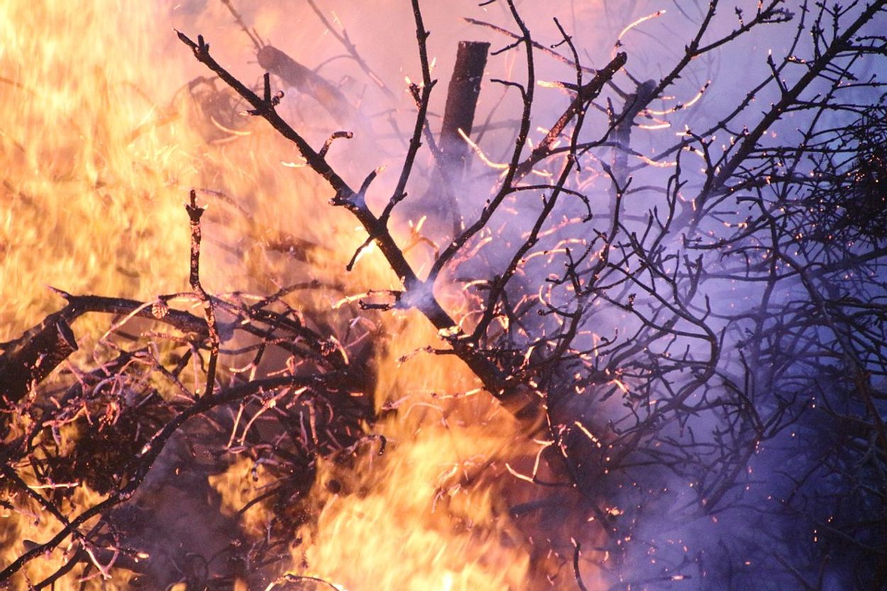 Afbeelding van Grote brand in natuurgebied Rozendaal