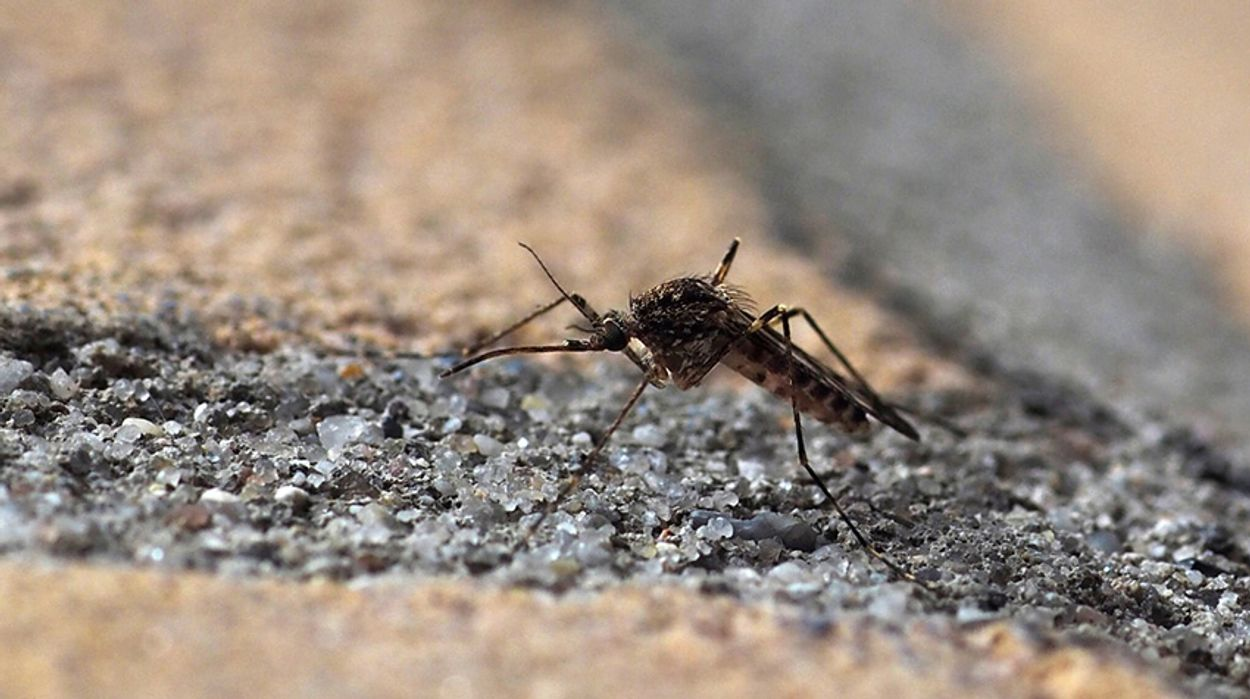 Afbeelding van Hoe malariamuggen ongemerkt weg komen