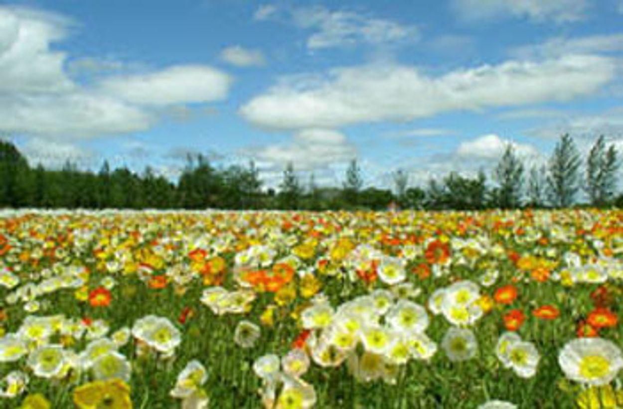 Afbeelding van Van zaad tot bloem