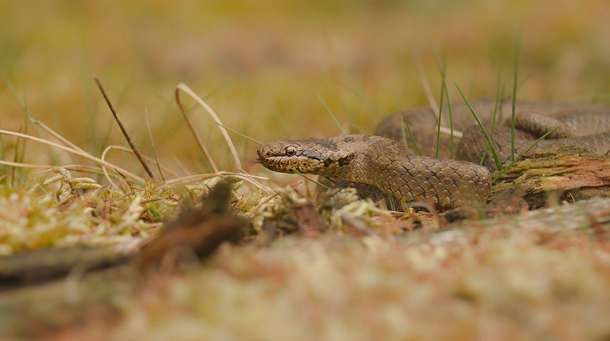 Afbeelding van Snelweg voor reptielen
