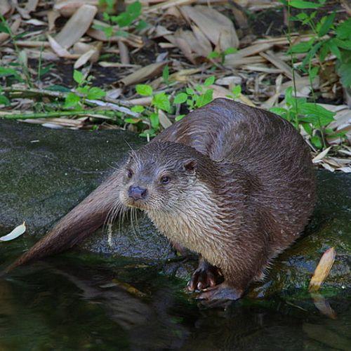 Afbeelding van Naardermeer als otterparadijs, Sea Rangers, Zandgat, fenolijn en overige onderwerpen