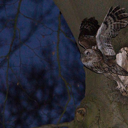 Afbeelding van Kunstlicht heeft duidelijk effect op nachtdieren