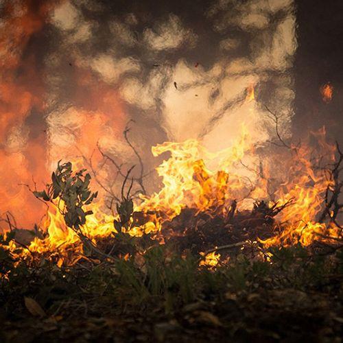 Afbeelding van Brabantse natuurbrand na drie dagen geblust