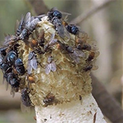 Afbeelding van Smikkelen van stinkende smurrie