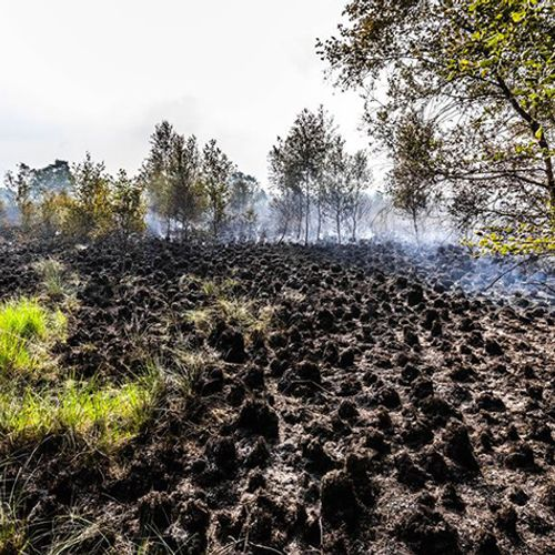 Afbeelding van Natuurbranden Brabant en Terschelling door droogte