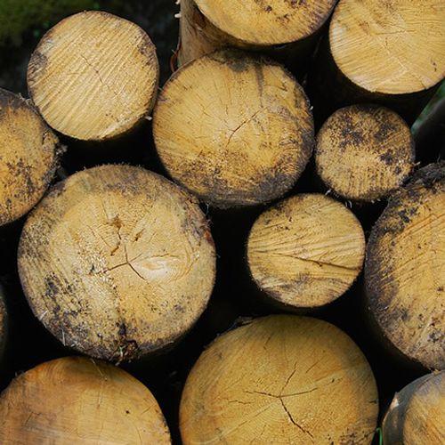 Afbeelding van Landelijke demonstratie: Stop (de overheidssubsidie op) Biomassa