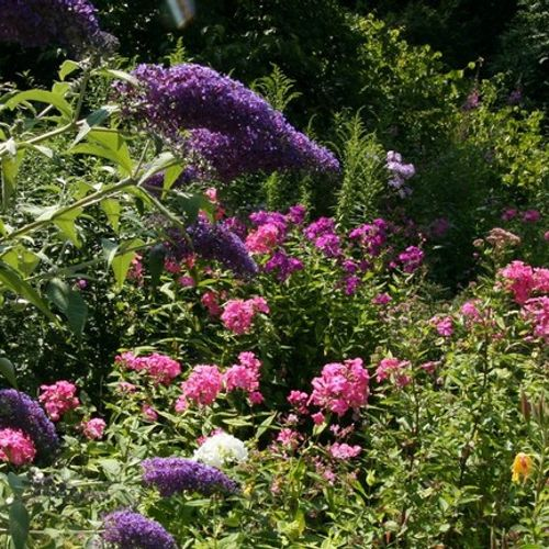 Afbeelding van Deze 26 planten maken van je tuin een groen paradijsje