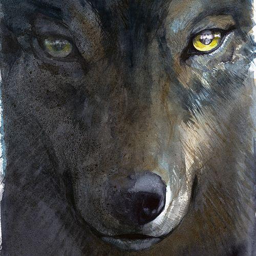 Afbeelding van Wat doen we met de wolf?   Podcast Special