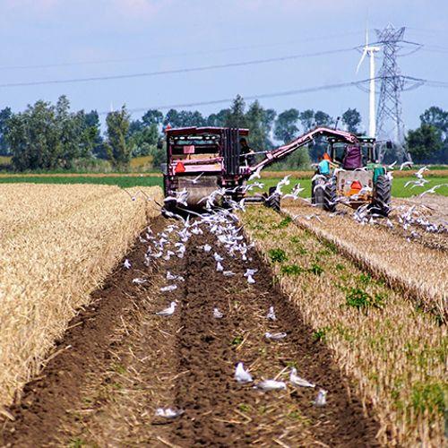 Afbeelding van Onderzoek: duurzaam boeren levert winst op