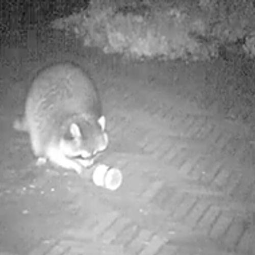 Afbeelding van Wat doen dieren 's nachts?