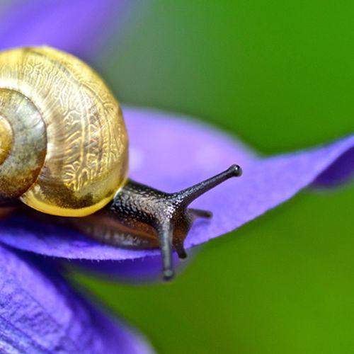 Afbeelding van Slakken in de tuin: zo jaag je ze weg