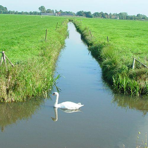 Afbeelding van Slechtere waterkwaliteit in de sloot