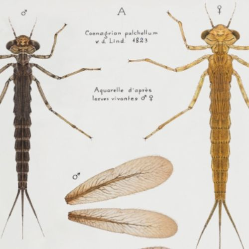 Afbeelding van Paul-Andre Robert: de Zwitserse libellengoeroe