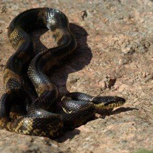 Afbeelding van Russische slangenenclave in Drenthe