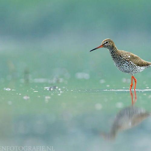 Afbeelding van Petitie: Stop jacht op weidevogels