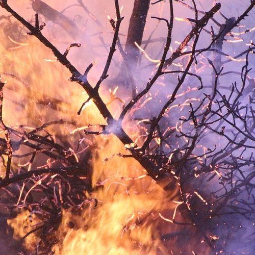 Afbeelding van Deze maand piek in aantal natuurbranden