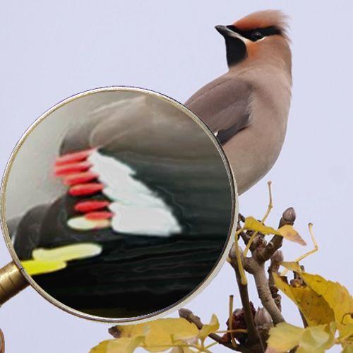 Afbeelding van Memory: zoek detail bij dier