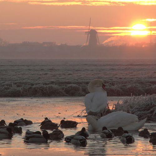 Afbeelding van Filmpje: Watervogels op een kluitje in wak