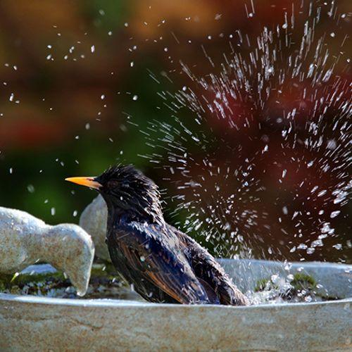 Afbeelding van Hoe help je de dorstige natuur?