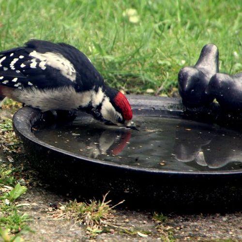 Afbeelding van Zo help je vogels de hitte door