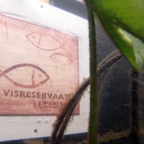 Afbeelding van Snorkelen in de Leidse grachten