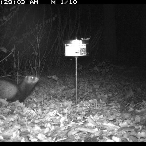 Afbeelding van Wildcams filmen verborgen leven in de tuin