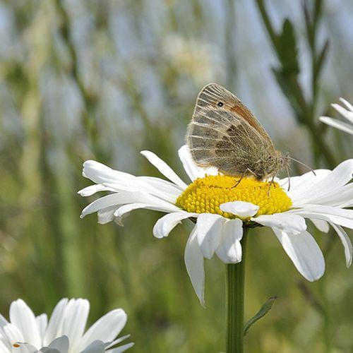 Afbeelding van Petitie WNF: natuurvriendelijke landbouw